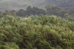 Misty grass Stock Photography
