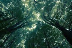 Misty green trees Stock Image