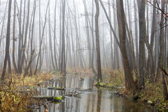 Misty grove Royalty Free Stock Images