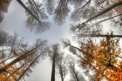 Misty haze in a beech forest in autumn Royalty Free Stock Photography