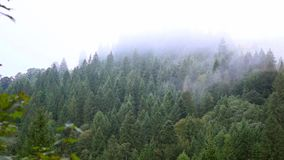 Misty haze over the trees stock footage