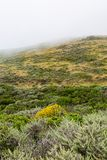 Misty Hillside imagens de stock royalty free