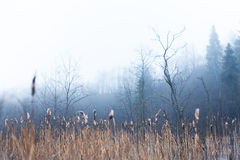 Misty hollow Stock Photography