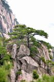 Misty Huangshan Mountains Royalty-vrije Stock Foto's