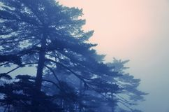 Misty Huangshan Mountains Royaltyfri Fotografi