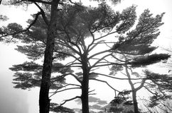 Misty Huangshan Mountains Image stock