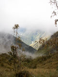 Misty Incan River Valley And växt Arkivbild