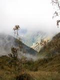 Misty Incan River Valley And växt Arkivbild