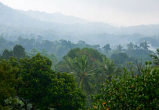 Misty jungle Stock Image