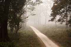 Misty jungle path Royalty Free Stock Photo