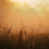 Misty jungle sunrise. Mist and sunshine on an early sunrise over an African jungle and grassy field Royalty Free Stock Image