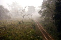 Misty jungle way Stock Photo
