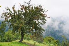 misty krajobrazu Zdjęcia Royalty Free