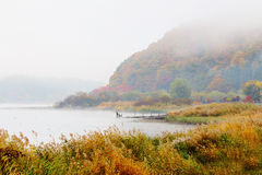 Misty lake in autumn Royalty Free Stock Image