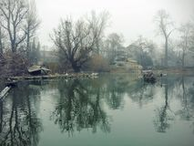 Misty lake. Foggy pond in Budapest Zoo, Hungary Royalty Free Stock Photography