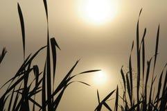 Misty Lake. Stock Image