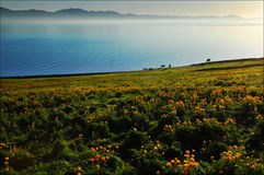 Misty lake with meadow Stock Images