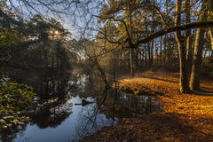 Misty lake in the middle of woodland in Poole Royalty Free Stock Image