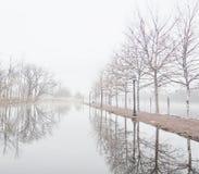 Misty lake in morning Royalty Free Stock Image