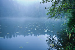 Misty lake morning Stock Image