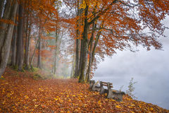 Misty lake shore and autumn woods Stock Photo