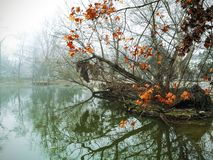 Misty lake and small island. Pond in Budapest Zoo, Hungary Stock Images