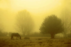 Misty landscape. In a horse in the background stock photography