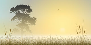 Misty Landscape. A Misty Sunrise, Sunset Landscape with Tree and Reeds Stock Photo