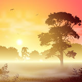 Misty Landscape. A Misty Forest Landscape with Trees and Sunset, Sunrise Royalty Free Stock Photo