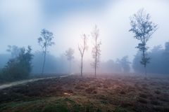 Misty landscape. Autumn in Leudal, Netherlands Royalty Free Stock Photography