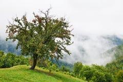 Misty landscape Stock Photography
