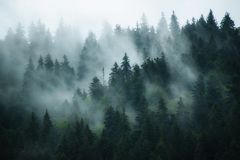 Misty mountain landscape Stock Photos