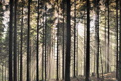 Misty landscape in forest Royalty Free Stock Photography