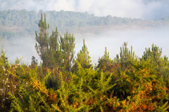 Misty landscape with  forest in summer Stock Photography