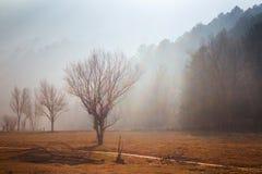 Misty landscape Stock Photos