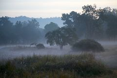 Misty Landscape in Indian Tiger Reserve at Dawn Stock Photos