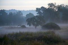 Misty Landscape in Indisch Tiger Reserve in Dawn Stock Foto's
