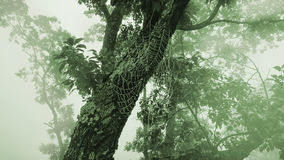 Misty landscape, old tree and big spiderweb Royalty Free Stock Image