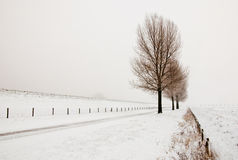 Misty landscape with a row of trees Stock Photo