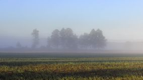 Misty landscape with trees and meadow in Poland. Misty landscape with trees and meadow under blue sky on Podlasie in Poland stock footage