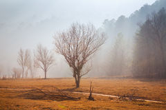 Misty landscape. In winter morning.  Catalonia, Spain Royalty Free Stock Photos