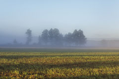 Misty Landscape With Trees And Meadow In Poland Royalty Free Stock Photos