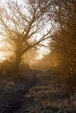 Misty Lane, Frosty Morning Royalty Free Stock Photos