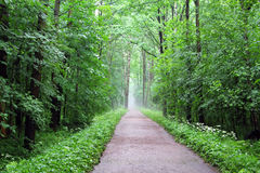 MISTY LANE IN THE PARK Stock Photography