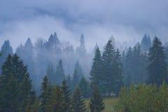 misty lasu. Fotografia Stock