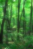 misty lasu. Obrazy Stock