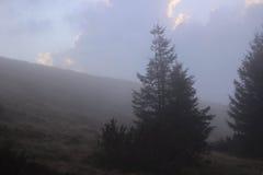 misty lasu Zdjęcie Royalty Free