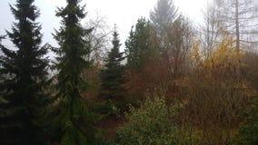 misty lasu Obrazy Royalty Free