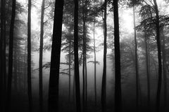 misty lasu Fotografia Stock