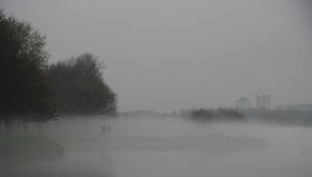 misty lasu Obrazy Stock